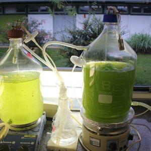 Laboratório de Ecotoxicologia (ECOTOX)